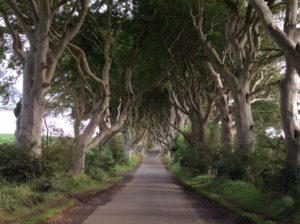 Dark Hedges in N.Ireland